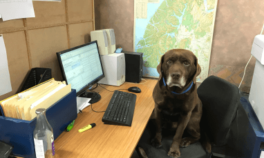 Office helper, Mousse the dog